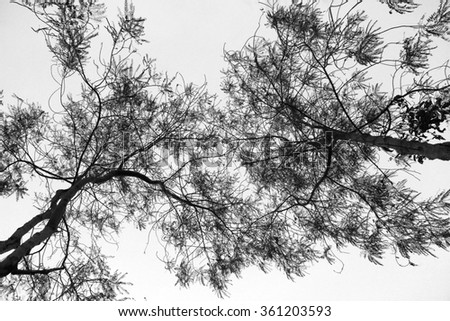 Abstract image of dry trees in black & white, taken from low angle - stock photo