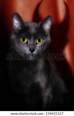 Abstract image of evil cat - stock photo