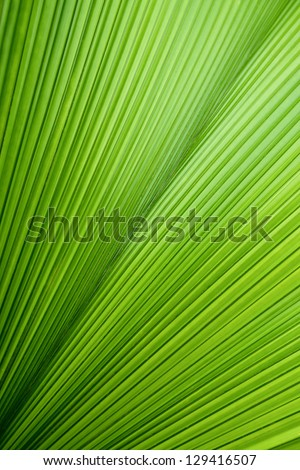 Abstract image of green palm leaf for background. - stock photo