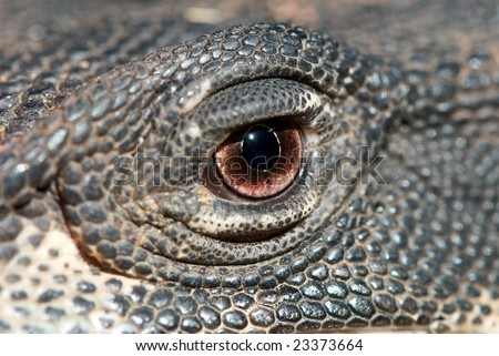 Abstract image of Lace Monitor's eye - stock photo