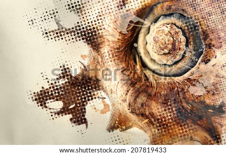Abstract image of seashell with design effects. - stock photo
