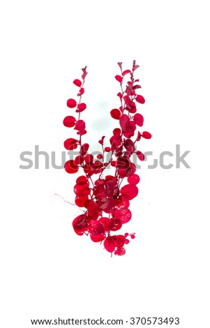 abstract ivy leaves  red isolated on a white background - stock photo