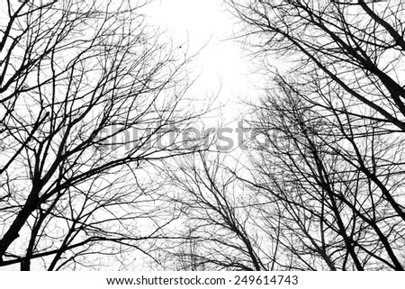 Abstract leafless tree branches in winter - stock photo