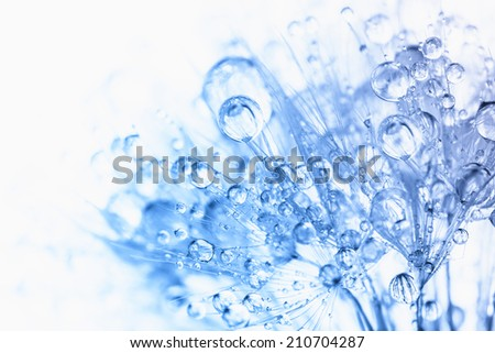 Abstract macro photo of plant seeds with water drops - stock photo