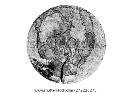 abstract map from white ant bite on cut wood in black and white - stock photo