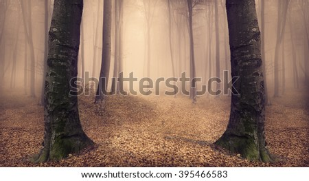 Abstract mirror in foggy forest. Spooky path - stock photo