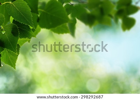 Abstract natural backgrounds. Green leaves with morninig dew - stock photo