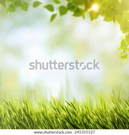 Abstract natural backgrounds with summer foliage and bright sunlight - stock photo
