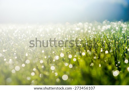 Abstract natural grass backgrounds with beauty bokeh - stock photo