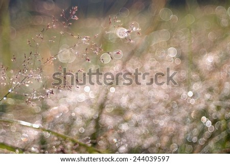 Abstract Nature Background - stock photo
