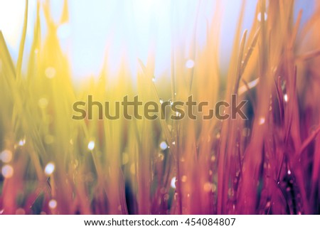 Abstract nature background. Autumn grass with water drops. Soft focus. - stock photo