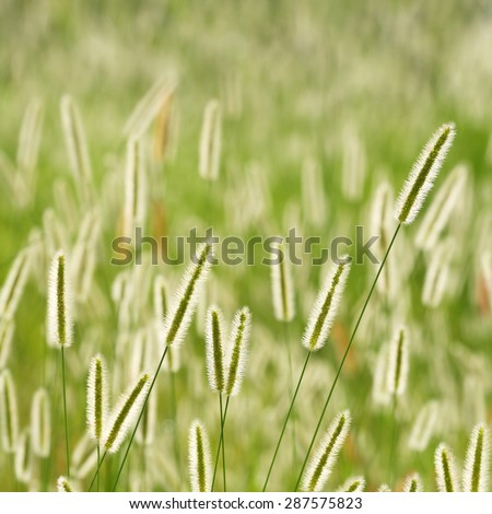 Abstract nature background with sunlight shining through over grass in the meadow - stock photo