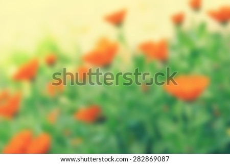 Abstract nature blur background. Delicate marigold flowers - stock photo