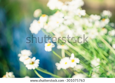 Abstract nature blured background with beautiful bokeh. Defocused green background with sunshine and leaves. Blur image of a meadow with daisies. - stock photo