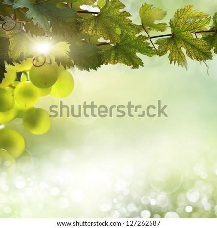Abstract Nature Bokeh - stock photo