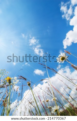 Abstract nature floral background. Amazing sunny day at summer meadow with wildflowers under blue sky - stock photo