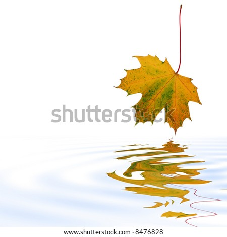 Abstract of a maple leaf with the colors of Autumn reflected over rippled water. Set against a white background. - stock photo