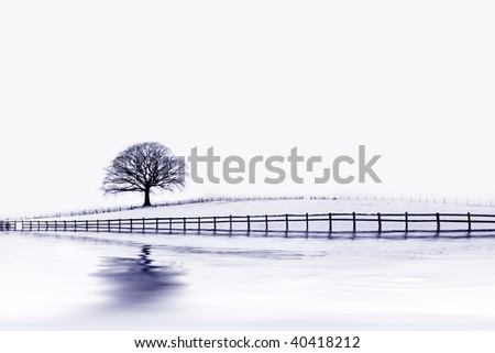 Abstract of an oak tree in a field of snow in winter with an old wooden fence and reflection, with blue tint. - stock photo