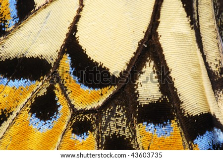 Abstract of butterfly's wing - stock photo