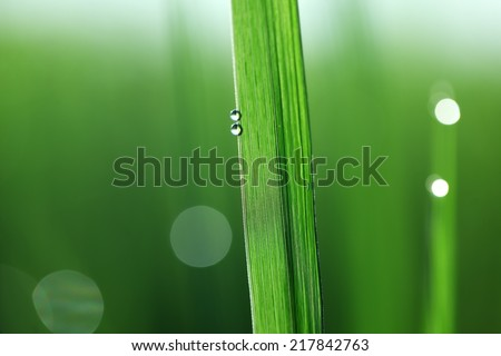 abstract of fresh leaf,shallow DOF. - stock photo