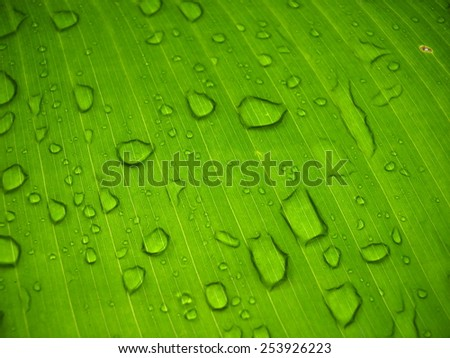 abstract of water drop on banana leaf - stock photo