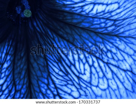 Abstract petals - stock photo