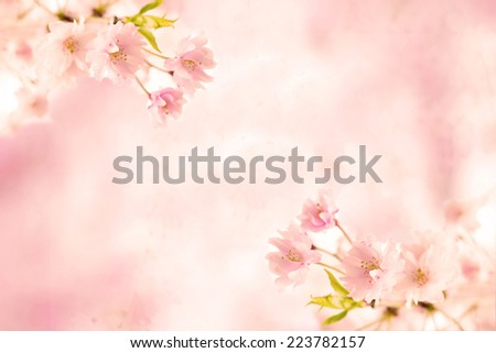 Abstract pink cherry blossom flower background - stock photo