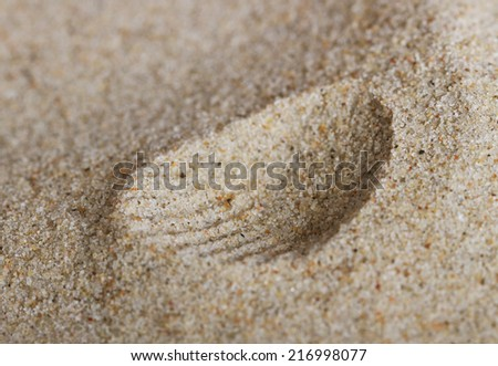 Abstract print of the shell.  - stock photo