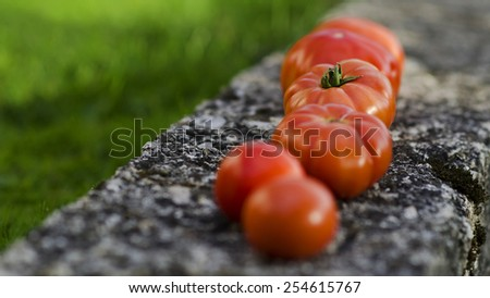 abstract rendering of a few freshly picked tomatoes on a wall in the garden, very shallow DOF - stock photo