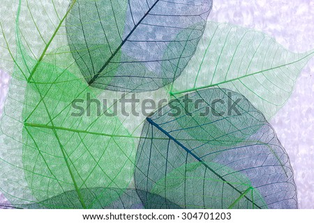Abstract skeleton leaves background - stock photo