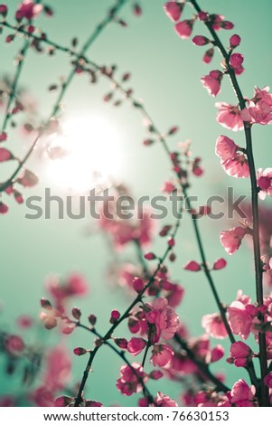Abstract soft background with cherry blossom and sunlight in shot. Selective focus image - stock photo