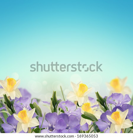 Abstract spring background for design. Easter/summer background. Floral background. Periwinkle and daffodils. - stock photo