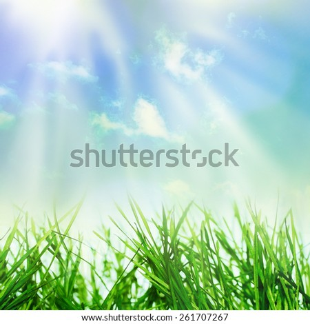 Abstract spring growing nature background in sunlight - stock photo