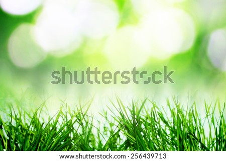Abstract spring growing nature in late spring - stock photo