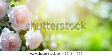 Abstract spring or summer floral background - stock photo
