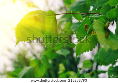 Abstract summer light with green leaves under sun - stock photo