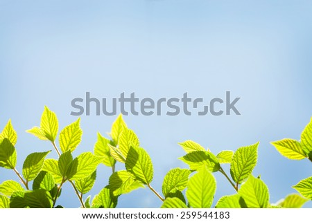 Abstract sunny summer background with green leaves and copy space - stock photo