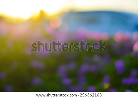 Abstract sunset background with blur flower and bokeh - stock photo