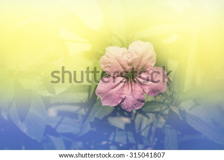 Abstract tone pink flower in the garden  - stock photo