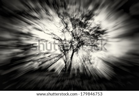 abstract tree and sun rays  - stock photo