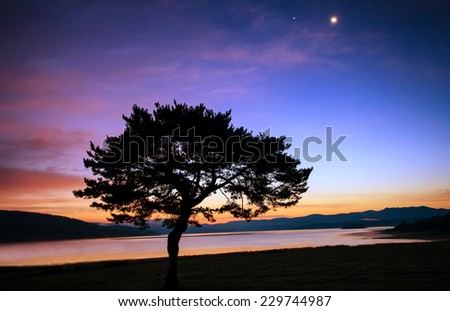 abstract tree silhouette over the moon sunrise near lake  - stock photo