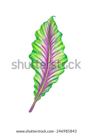 abstract tropical leaf, jungle plant, watercolor illustration isolated on white background - stock photo