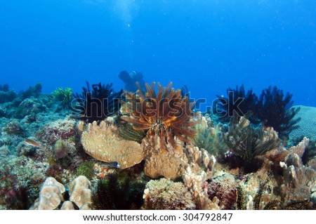 Abstract underwater scene, Coral reef in deep blue sea - stock photo