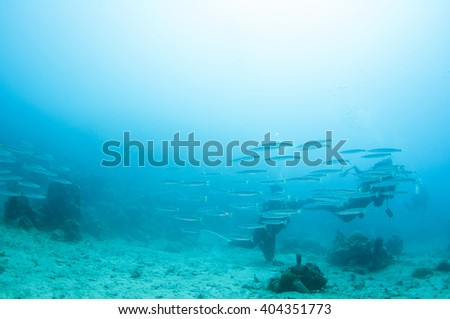Abstract underwater scene, group of fish and scuba divers. - stock photo