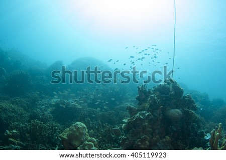 Abstract underwater scene of Philippines. - stock photo