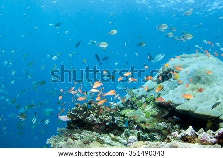 Abstract underwater scene of Tulamben, Bali, Indonesia. - stock photo