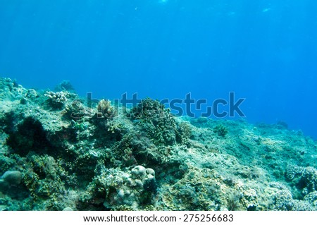 Abstract underwater scene, sun rays and coral reef. - stock photo