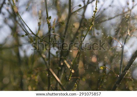 abstract wallpaper of asparagus against sunshine with flying water particle - stock photo