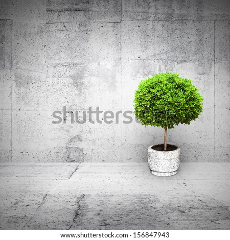 Abstract white interior with concrete walls and small green decorative tree growing in a pod - stock photo