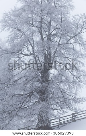 Abstract winter scenery in the mountains with trees and fog - stock photo